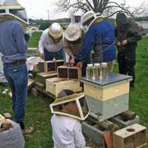 Koty e la classe di un tutoraggio a Associazione la Tennessee Valley Bee Keeper a Chattanooga.