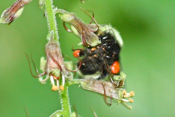 bumble-bee-5-11-13-3