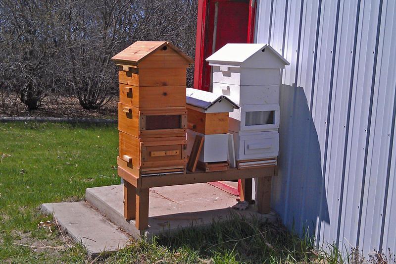 beehive-2-Sirovy-800-px