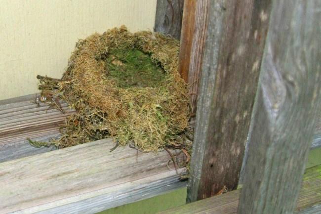 Bird-nest