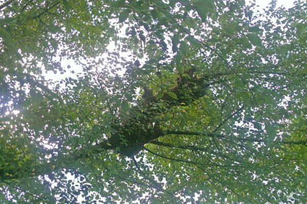 Joan-Johnson-September-swarm