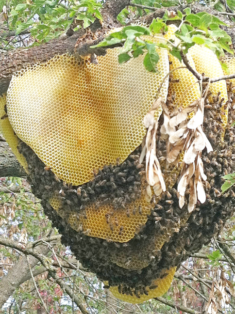 Close-up-of-hive-in-tree