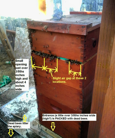 Scott-Mathews-robbing-bees