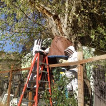 The tarp and final layer were secured to the tree and fence. © Naomi Price.