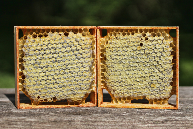 Comb-honey-squares