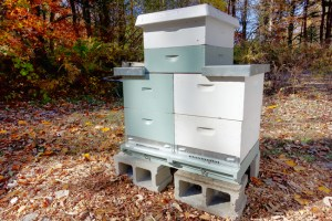A two-queen Langstroth system. Hive and photo © Bill Hesbach.