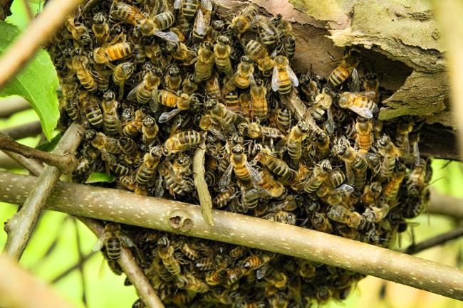 Swarm-settling-Rusty-Burlew