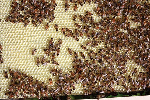 More than one bee