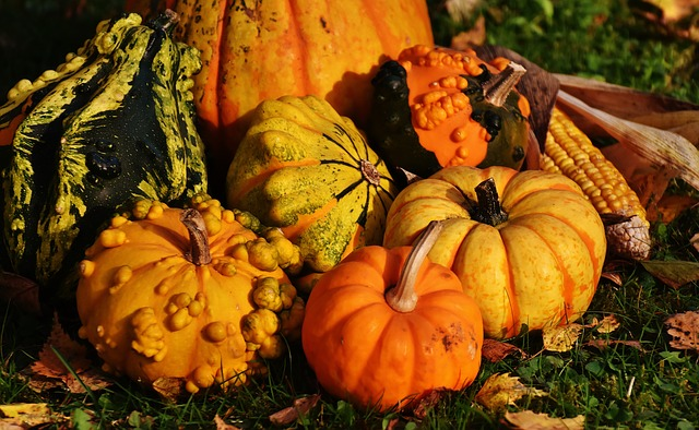 Pumpkins and squash for a happy thanksgiving