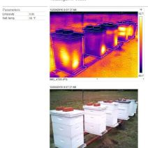 Hives dec 20 2016