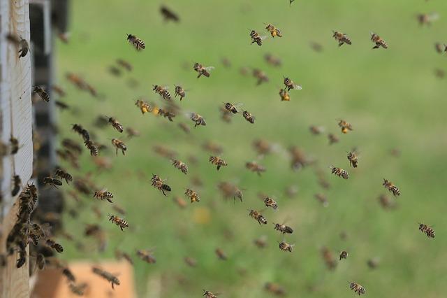 Honey bees at hive entrance