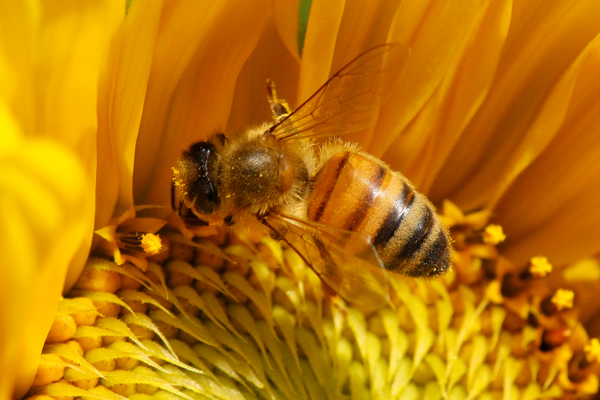 A quiz on basic honey bee biology for beginners.