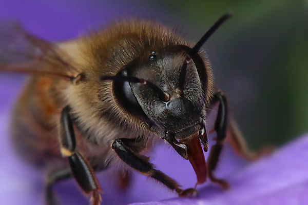 Thinking of bees in winter