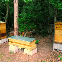 Josh's hives are treated with a mixture of beeswax and raw linseed oil. © Josh Muckley.