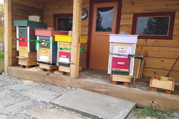 Montana bee house with hives inside