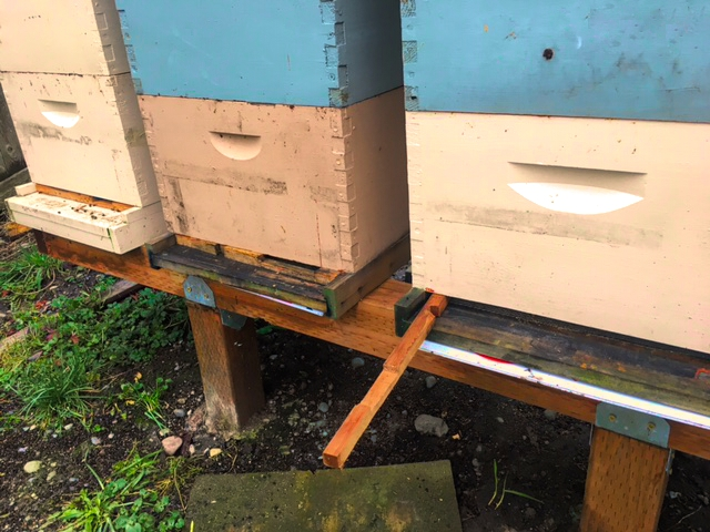 The entrance reducer of a hive has been pulled free so the rats can reach into the hive.