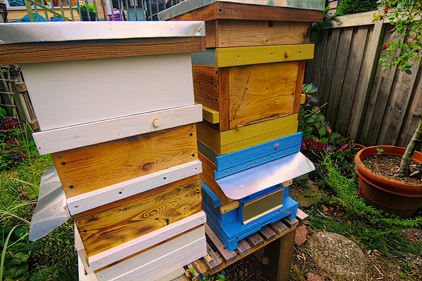 Feed stacked nucs (right). Double box nuc (left). All with feeder frames above the brood boxes. Separating the stacked nucs is a screened Snelgrove board.