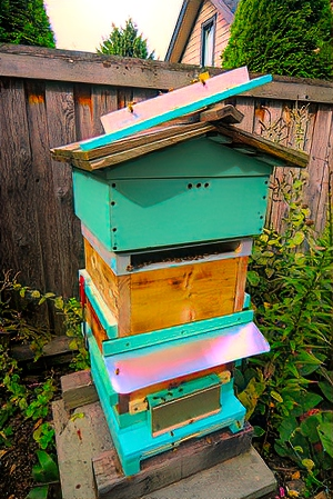 """Green hive with open feeder frame. The entrance """"plug"""" is on top of hive. Opening allows a <1.5"""" hard candy brick inserted directly on the tops of the brood frames. No disturbance to the hive."""