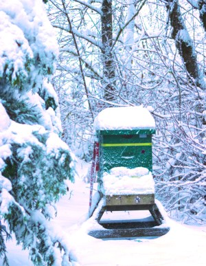 Hive tapping: Unexpected noises should be expected. A beehive covered in snow.
