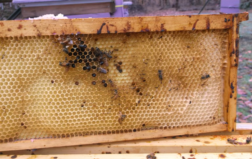 Bee feces has dripped down between the frames and landed on the combs. Any disease organisms living in the feces can be easily spread from bee to bee, including nosema. On the other hand, many nosema-decimated hives have no dysentery whatsoever.