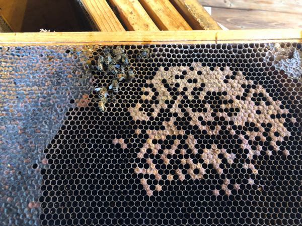 Shot brood can result from several different conditions.