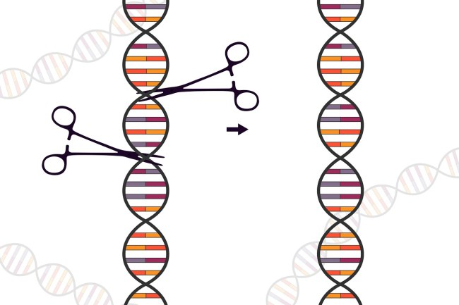 Drawing of a pair of scissors cutting a strand of DNA, illustrating how CRiSPR works.