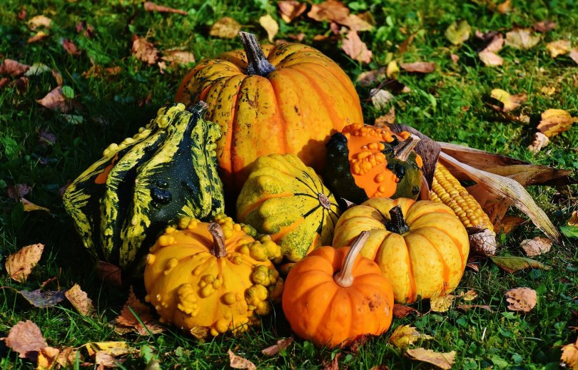 An assortment of squashes and a reminder to share what you know.