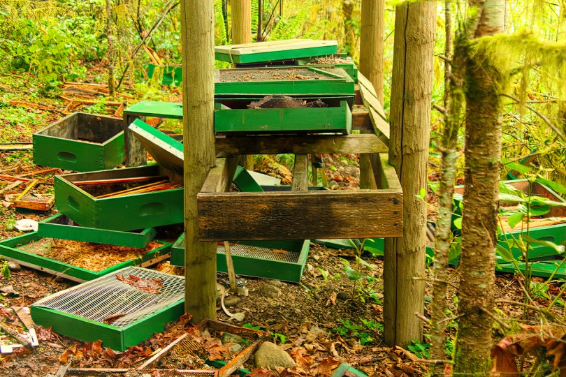 This hive stand was furthest from the house and closest to the forest. I assume she started here. Having great fun, she kept going.