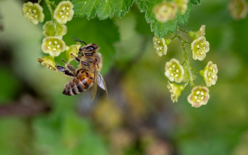 Honey is the only crop with an animal intermediary coming between the plant and the product. Plants cannot produce honey without bees, but bees are not concerned about the finer points of terroir.
