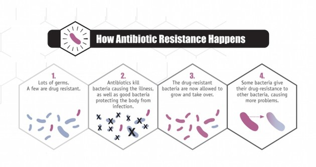 What's All The Fuss About Bacteria? - jan wellmann