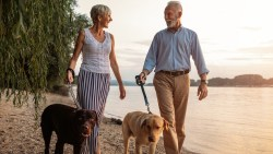 dogs, walking dogs, couple walking dogs, older couple, dating after 50, dating