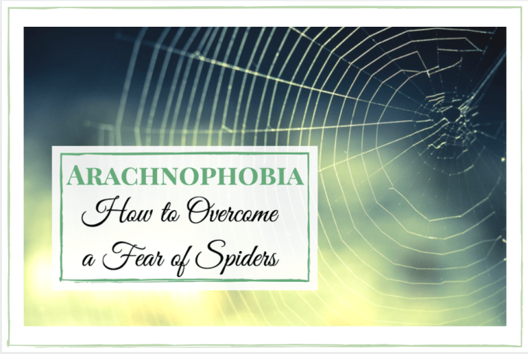 Arachnophobia How to overcome a fear of spiders