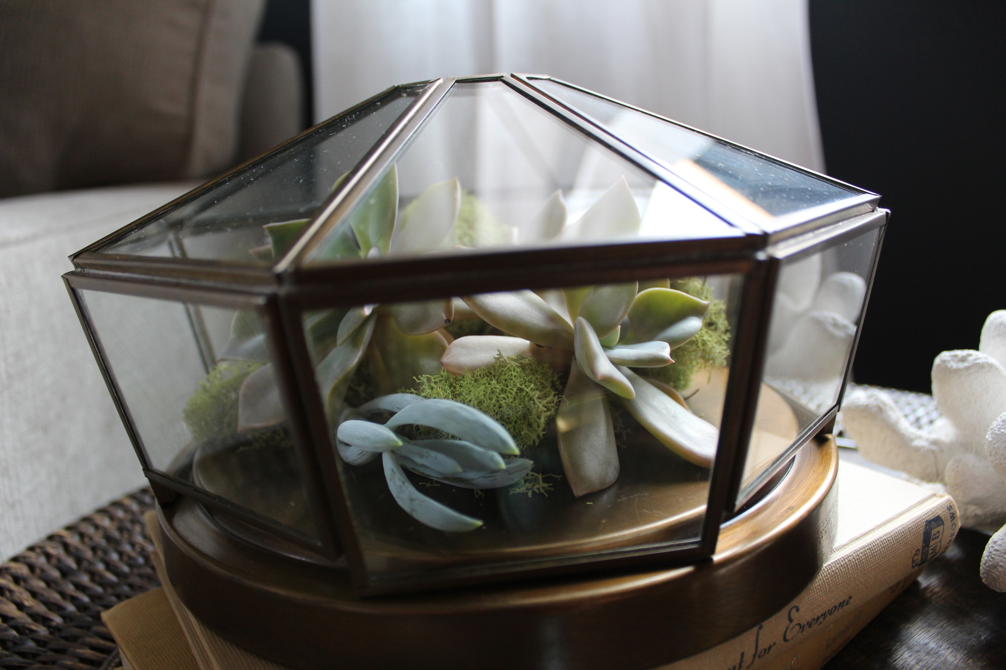 Repurposed Light Fixture Succulent Terrarium
