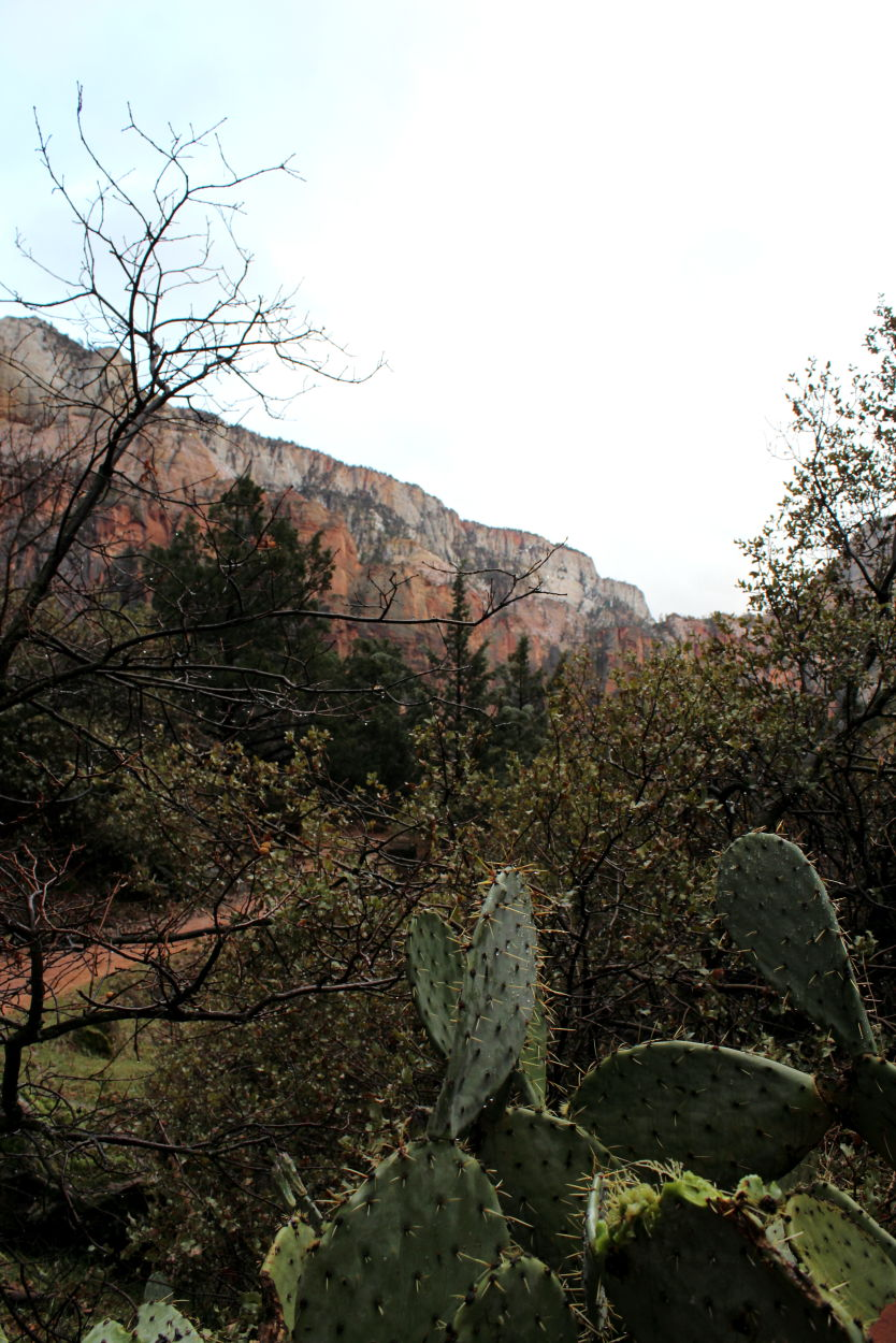 View of Zion from the Emerald Pools Trail