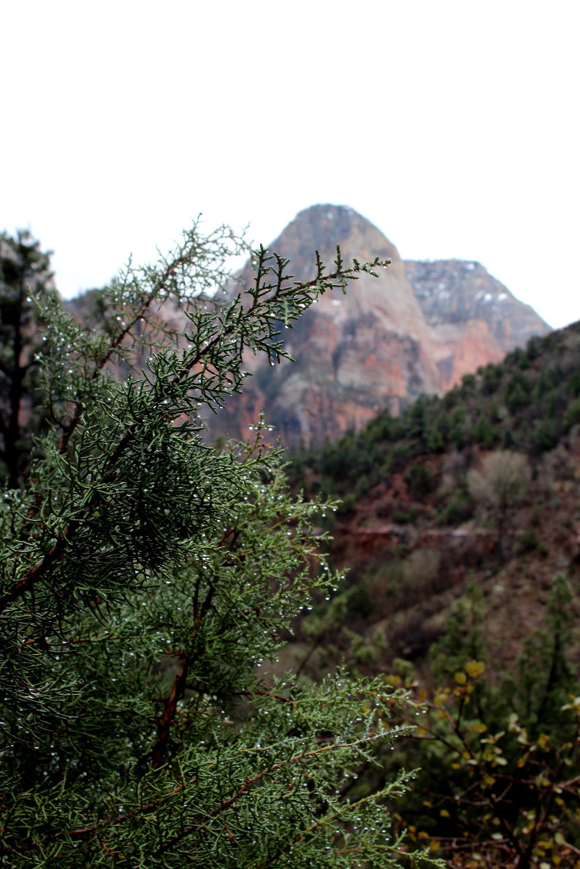 4 hikes to do in Zion National Park in the rain