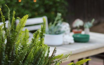 Outdoor Centerpiece with a Coral Cactus, Shells & Pottery