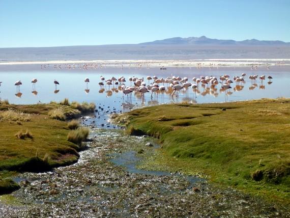 Lago Colorado Bolivia with Flamingo