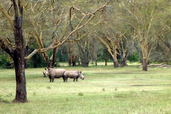 Solio rhino sanctuary, Kenya