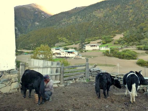 tibetan farmers of yunnan