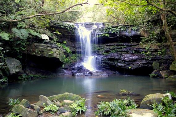 Iriomote waterfall hike