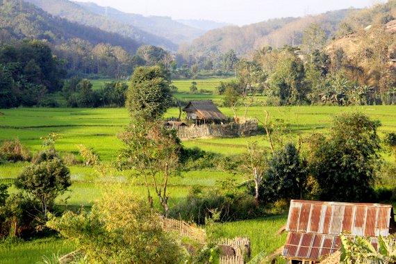Rice paddies of Laos