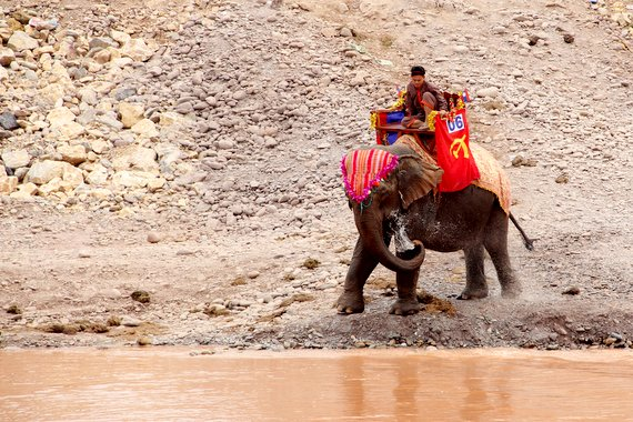 Time for an Elephant Bath in Laos
