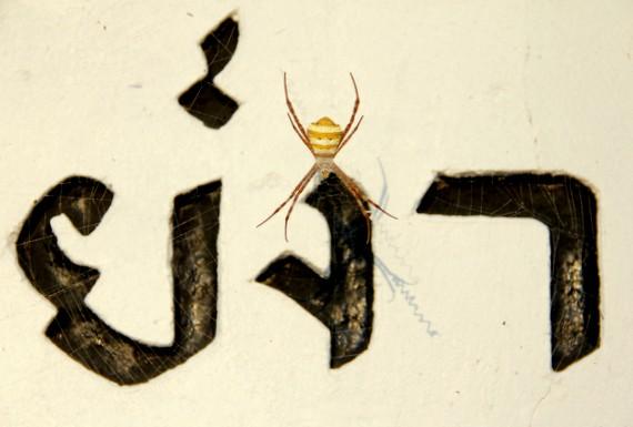 Thailand Spiders
