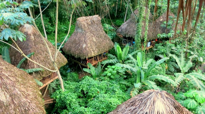 dominican tree house village