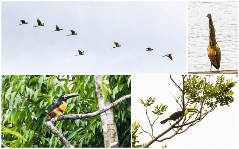 Birdwatching-Tortuguero