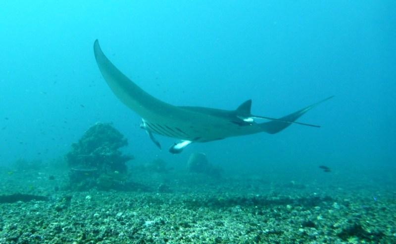 scuba diving komodo-indonesia-honeytrek-com