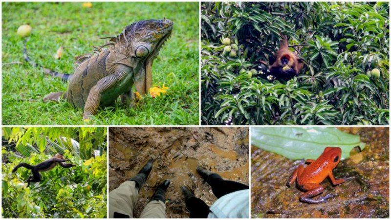Jungle Trek - Tortuguero - HoneyTrek.com