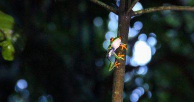 On Safari in Tortuguero, Costa Rica