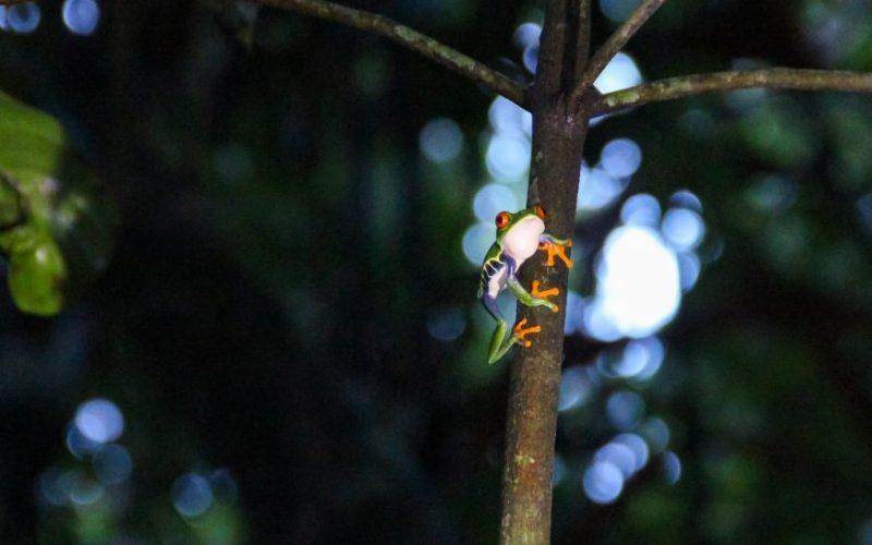Tortuguero - HoneyTrek.com-9261