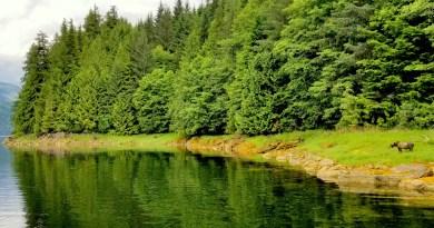 British Columbia's Best Bear Watching Destinations